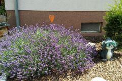 Lavendel-Fam-Wütscher